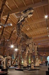 DINOSAURI. Giganti dall'Argentina-Argentinosaurus