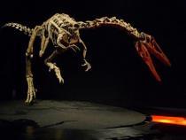 DINOSAURI. Giganti dall'Argentina-Austroraptor