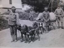 Gli Animali della Grande Guerra