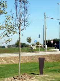 Giornata europea dei Giusti- Eventi 2021-Stele a albero dedicati a Giorgio Perlasca