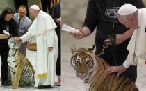 Con occhi di tigre. Lezioni di vita dai grandi felini. Incontro e proiezioni