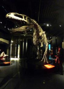 un esemplare di scheletro di dinosauro