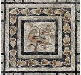 5M Raccolgo & Coltivo. Semi, fiori, frutti, foglie e radici tra archeologia e archeobotanica